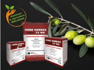 Difendere l'oliveto dai principali patogeni fungini con Cobre Nordox 75 WG