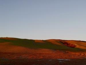 colline-siena-by-matteo-giusti-agronotizie
