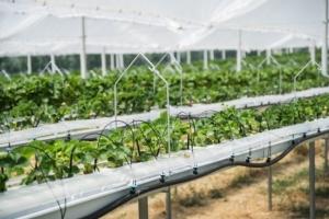 coltivazioni-fuorisuolo-irritec