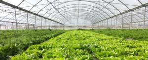 coltivazioni-in-serra-13-mar-2021-ortomami