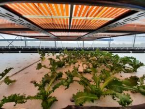 coltura-idroponica-sotto-prototipi-di-pannelli-fotovoltaici-uni-roma-tor-vergata-terzo-art-set-2021-rosato-fonte-prof-a-reale