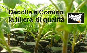 colture-protette-sicilia-comiso-filiera-qualita-terra