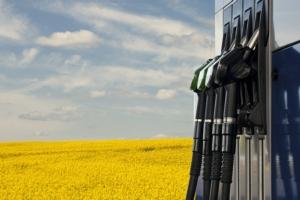 L'energia della colza - Plantgest news sulle varietà di piante