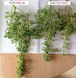 Adriatica ha la soluzione per uniformare fioritura, allegagione e pezzatura - Fertilgest News