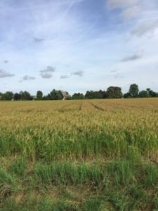 Riso del Delta del Po Igp: sempre più competitivo grazie al bio - Plantgest news sulle varietà di piante