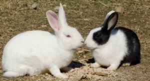 """Alla ricerca del coniglio """"felice"""""""