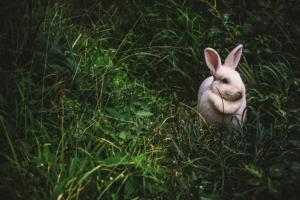 coniglio-nuova-zelanda-prato-pexels