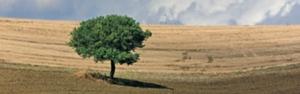convegni-informatore-agrario-ottobre-2011