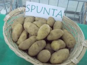 convegno-patata-sant-eufemia-10nov2012
