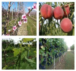 Veg-aid: fiori e frutti così non vengono da soli - Fertilgest News