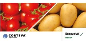 Executive<sup>®</sup> su pomodoro: obiettivo orobanche