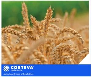 Una linea Premium per i cerealicoltori