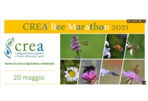 crea-bee-marathon-by-crea-jpg