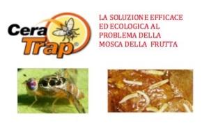 """Cera Trap<sup>®</sup>, la """"vera"""" lotta biologica alla mosca della frutta"""