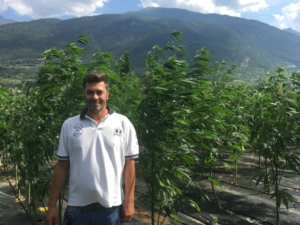 Cannabis light in montagna? Si può fare