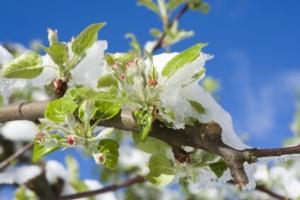 NoFrost, la soluzione crioprotettrice di Adriatica - le news di Fertilgest sui fertilizzanti
