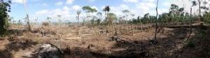 deforestazione-foresta-amazzonica-by-tarcisio-adobe-stock-750x500