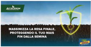 Mais: riflessi pronti, partenze col turbo - Plantgest news sulle varietà di piante