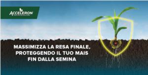 Micorrize al servizio delle radici del mais - colture - Fertilgest