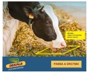 dekalb-dkc7084