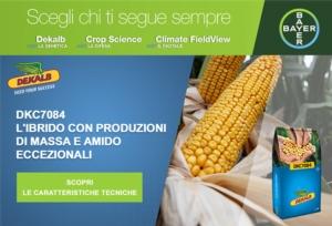 DKC7084: per chi ama il mais dalle taglie forti - Plantgest news sulle varietà di piante