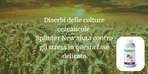 diserbo-colture-cerealicole-splinter-new-fonte-ilsa