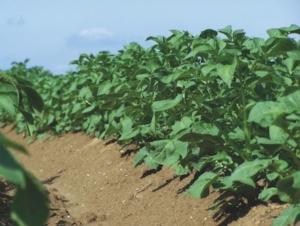 Proman<sup>®</sup> Flow adesso anche per soia, girasole e favino da seme