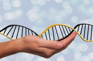 Genetica bovina, che la rivoluzione abbia inizio