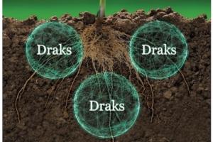 draks-fonte-agriges