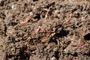 Il vermicompostaggio: che cos'è e come funziona