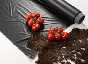 Terreno migliore, produzione maggiore e più gusto per i pomodori - Plantgest news sulle varietà di piante