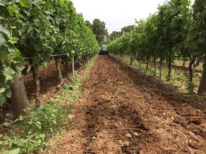 enovitis-in-campo-2016-trattore-vigneto-byagncspadoni