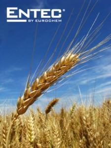 Concimazione sostenibile del grano