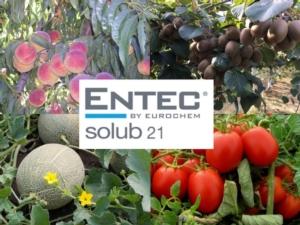 Entec solub 21: la nutrizione azotata idrosolubile efficiente per definizione