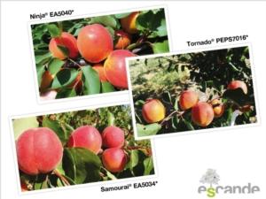 Vivai Escande, la ricerca della qualità - Plantgest news sulle varietà di piante