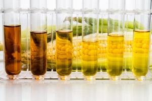 etanolo-mais-pannocchia-biocarburanti-by-thamkc-adobe-stock-750x500