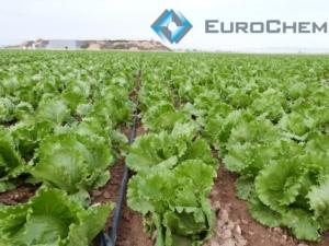 EuroChem: la nutrizione delle orticole - EuroChem Agro - Fertilgest News