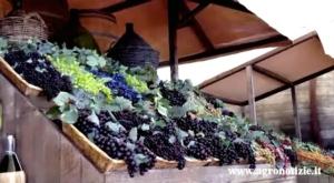 expo-vino-viticoltura-grappoli-uva-fonte-tommaso-cinquemani-agronotizie