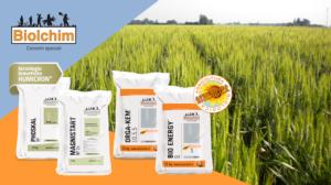 Fare reddito con il grano: come gestire la nutrizione - Biolchim - Fertilgest News