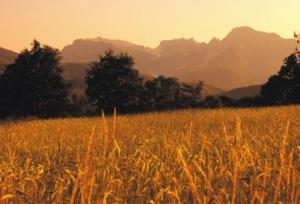 farro-garfagnana-paesaggio-montagna-cereali-by-coop-garfagnana-jpg