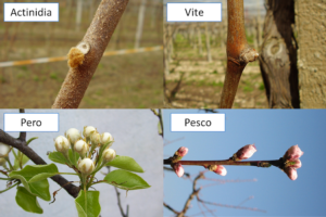 Colture frutticole, come uniformare germogliamento e fioritura