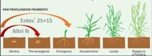 fasi-fenologiche-fonte-eurochem-agro