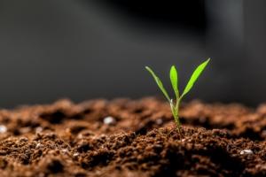 fertilita-terreno-suolo-fertile-germoglio-by-fotofabrika-adobe-stock-750x500