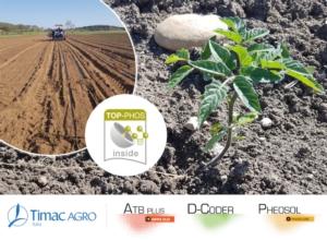 Pomodoro da industria: come costruire solide fondamenta per le produzioni - le news di Fertilgest sui fertilizzanti