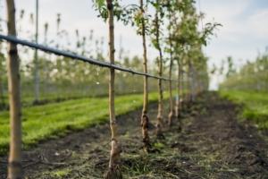 Frutteti, i vantaggi della fertirrigazione - colture - Fertilgest
