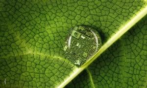 festival-piante-20200529-fonte-agroinnova