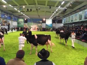 fiera-agricola-zootecnica-italiana-di-montichiari-2015-1
