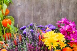 fiori-florovivaismo-by-photosg-fotolia-750