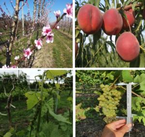 Veg-Aid: fiori e frutti così non vengono da soli - colture - Fertilgest
