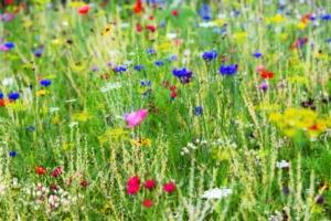 fiori-prato-incolto-by-m-dorr-m-frommherz-adobe-stock-750x500
